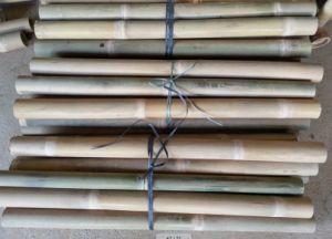 Bamboo Cane pictures & photos