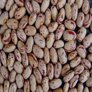 Light Speckled Kidney Bean Roud Shape