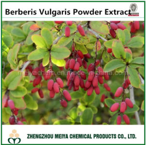 Pharmaceutical and Food Grade Berberis Vulgaris Powder Extract 10: 1 pictures & photos