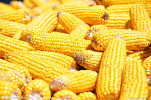 Nature Corn Starch Food Grade pictures & photos