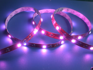 Waterproof Flexible LED Strip/ 5050 SMD LED Strips pictures & photos