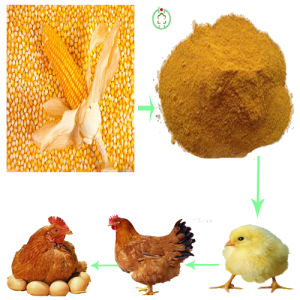 Corn Gluten Meal Protein Powder Animal Feed Poultry Feed pictures & photos