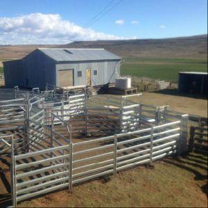 Australia Galvanized Used Cattle Livestock Panels/6rails Sheep Panels pictures & photos