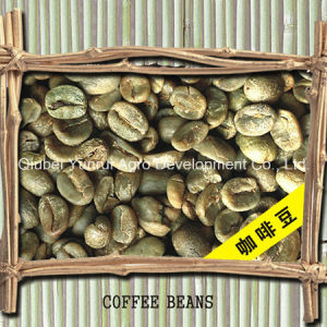 Chinease Arabica Green Coffee Bean