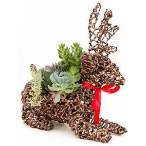 Deer Rattan Rope Succulent Planter pictures & photos