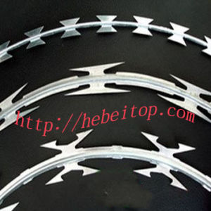 Concertina Barbed Wire (BTO-10, CBT-65, CBT-60)