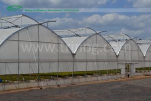 Agricultural Multi-Span Film Greenhouse for Lettuce pictures & photos