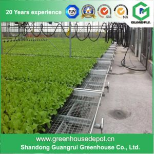 Movable Greenhouse Seed Bench for Planting pictures & photos