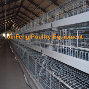 Automatic a Type Broiler Chicken Cage Hot Sale in Africa pictures & photos