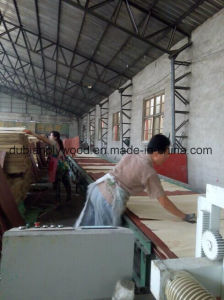Factory Sales 5mm Full Poplar Plywood Without Face & Back pictures & photos