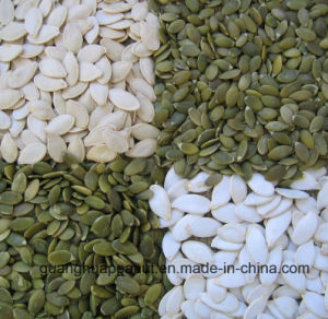 Best Quality Snow White Pumpkin Seeds Kernels pictures & photos