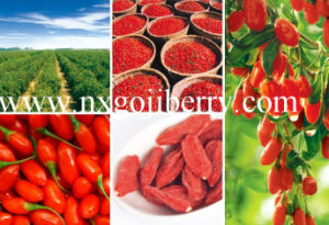 Dried Goji Berries From Zhongning, Ningxia pictures & photos