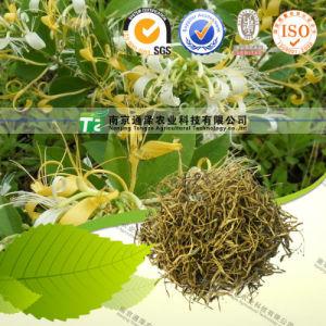 Stabilizing Pregnancy Herbal Medicine Honeysuckle pictures & photos