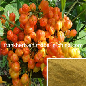 10%, 20% Guarana Seed Extract pictures & photos