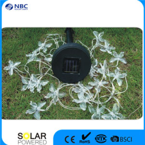 Solar String LED Lantern with 10 PCS Multicolor LED pictures & photos