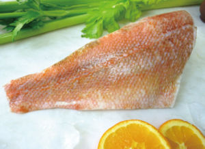 Frozen Redfish Fillet Porton, Ocean Perch