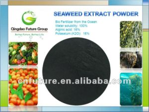 Fresh Brown Seaweed Extract Powder From Brown Seaweeds Sargasso pictures & photos