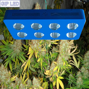 1000 Watt LED Grow Light with 8 X 126 Watt Integrated LED 90 Degree Glass Lens Hydro pictures & photos