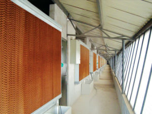 Broiler and Layer Cage in Poultry Farm Construction pictures & photos