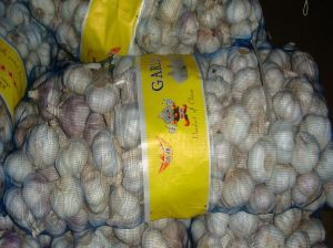 5.0 Cm up New Crop Normal White Garlic pictures & photos