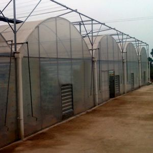 Low Cost Agriculture Mutil Span Film Greenhouse for Vegetable Growing pictures & photos