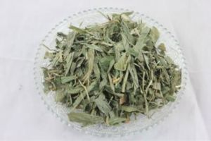 Factory Supply Natural Herbal Lophatherum Gracile Extract Powder /Bamboo Extract pictures & photos