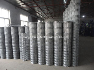 Galvanized Chain Link Wire Mesh/2 X 2 Galvanized Welded Wire Mesh Panel/Galvanized Chicken Wire Mesh pictures & photos