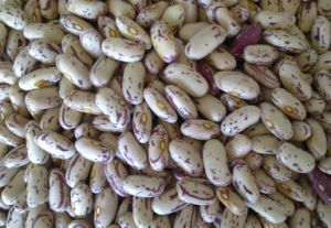 Light Speckled Kidney Bean, Pinto Bean pictures & photos