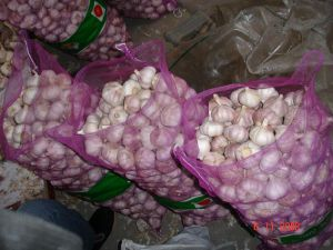 Small Packing of Garlic pictures & photos