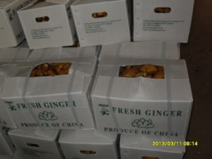 China Fresh Ginger with High Quality pictures & photos