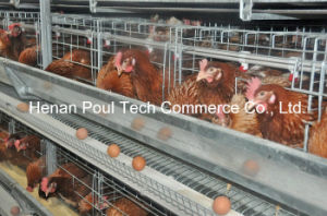 4-5 Tiers H Frame Layer Chicken Cage (Euro Standard) pictures & photos