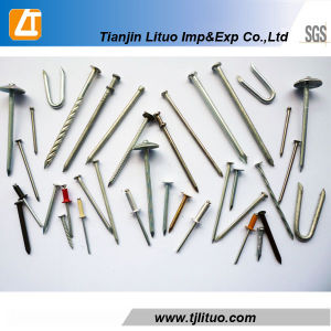 Common Nails Bright Ring Shank Nails Iron Nails pictures & photos