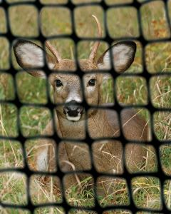 Anti-Animal Net/ HDPE Netting with UV Resistant pictures & photos