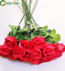 Cut Flower Rose for Decoration pictures & photos