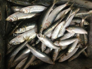 Bqf Frozen Seafood Fresh Sardine Fish pictures & photos