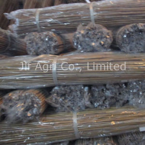 Nature Dry Straight Tonkin Bamboo Cane pictures & photos