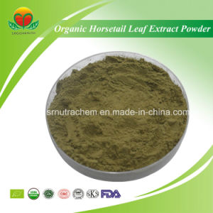 High Quality Organic Horsetail Leaf Extract Powder pictures & photos