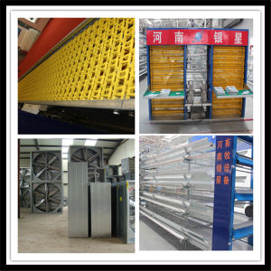Bird Layer Cage for Hot Sale pictures & photos