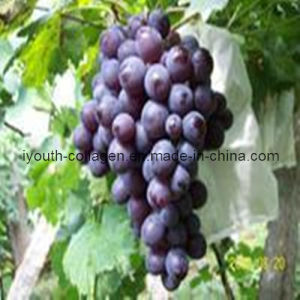 Natural Grape Pollen Tablets, Health Food pictures & photos