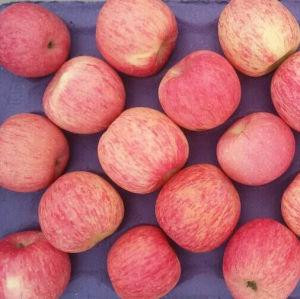 High Quality of Fresh Red FUJI Apple pictures & photos