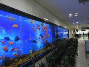 Large Acrylic Sheets for Aquarium pictures & photos