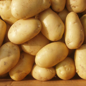 2017 New Crop Potato with Good Quality pictures & photos