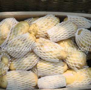 Chinese Holland New Crop Fresh Potato pictures & photos