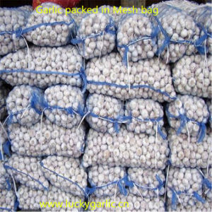 Small Mesh Bag Packing Pure White Garlic pictures & photos