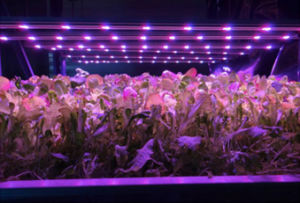 36W 1.2m Integrated LED Grow Tube Light Full Spectrum SMD2835 pictures & photos