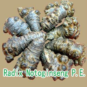 Radix Notoginseng