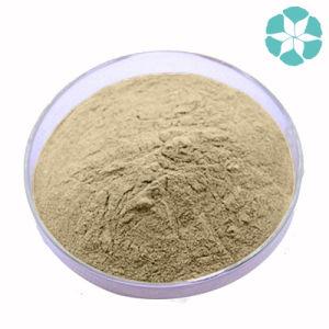 Maca Extract / Lepidium Meyeni Extract pictures & photos