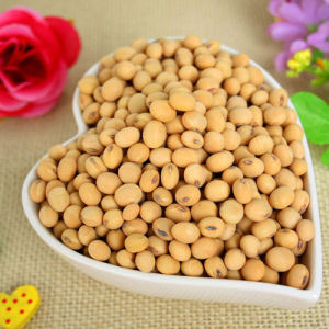 Bulk Dried Soybean in China with Cheap Price pictures & photos