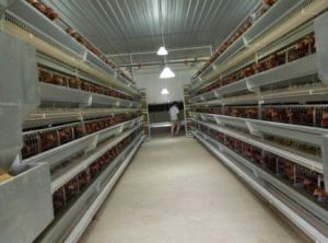 Steel Structure Chicken Farm Cage pictures & photos