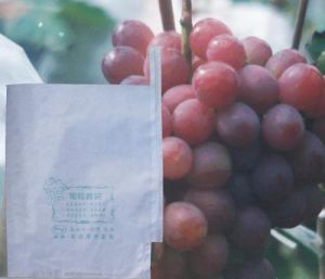 Made in China Custom Made White Color Food Grade Water Resistant Paper Bag for Fruit Growing Protect pictures & photos